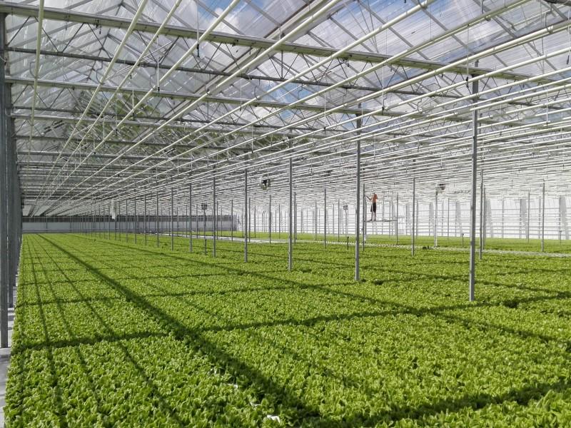 http://www.industrialproductsolutions.nl/wp-content/uploads/2018/01/DFT-website-pagina-800-x-600.jpg