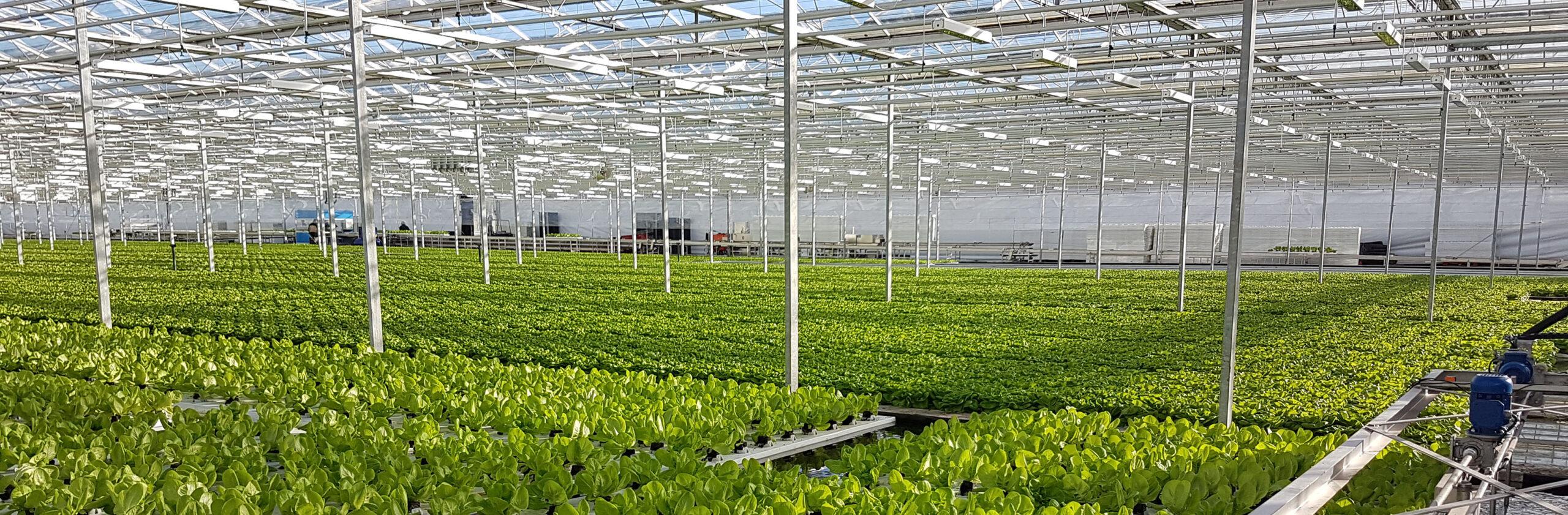 Glastuinbouw automatisering